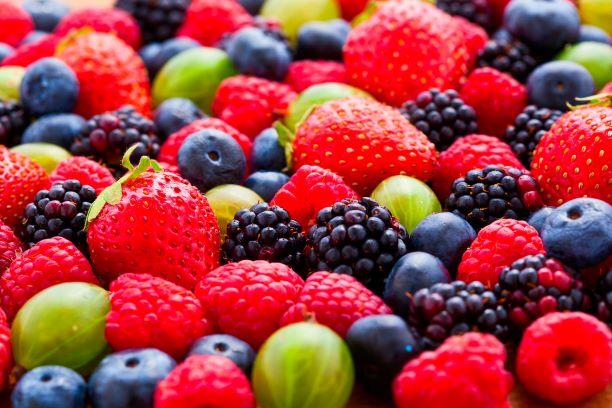 Orientação Técnica no manejo orgânico de pequenas frutas